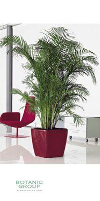 pflanzen in nanopics vereist nahaufnahme makro pflanzen blumen winter eis eiskristalle. Black Bedroom Furniture Sets. Home Design Ideas