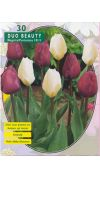 Tulp Beauty Mix Purissima/Negrita - Duo Beauty