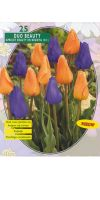 Tulp Beauty Mix Apricot Beauty/Negrita