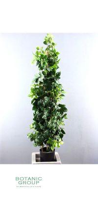 Kunstbaum - Cissus Kletterpflanze