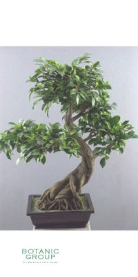 Kunstbaum - Bonsai ficus folia
