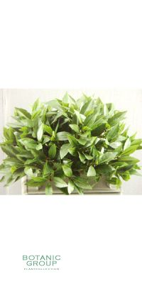 Artificial plant - laurel half