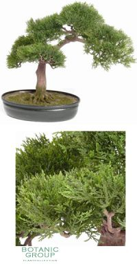 Kunstbonsai - Bonsai ceder 225 Blätter