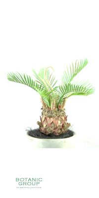Artificial Palms - Cycas x6