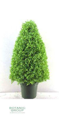 Kunstbaum - Leucodendron topiary