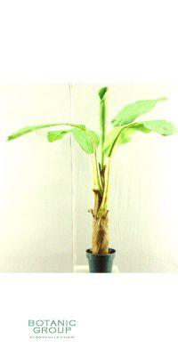 Kunstpflanze - Bananenpflanze