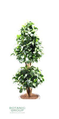Artificial plant - laurel  topiary x2