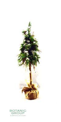 Kunstbaum - Salt Lake City Weihnachtsbaum mit Schnee