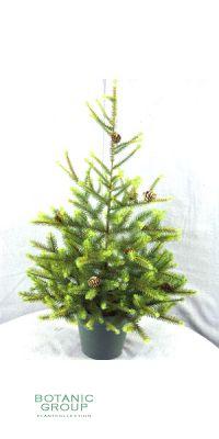 Künstlicher Weihnachtsbaum mit Zapfen und Topf