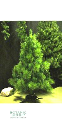 Art Tree - Chirstmas Tree