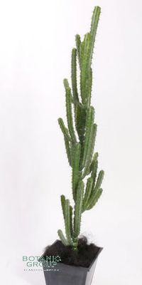 Artificial Cactus, Myrtillocactus geometrizans