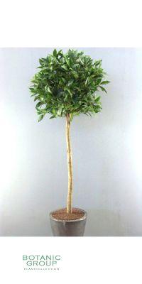 Kunstbaum - Lorbeerbaum, kugelform, mit Beeren, dunkelgrün