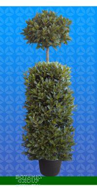 Laurus nobilis - Echter Lorbeerbaum Säule mit Kugel