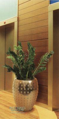 Zamioculcas zamiifolia  in a Planter
