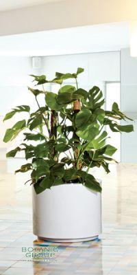Planter - plastic EWS Basic Rondo