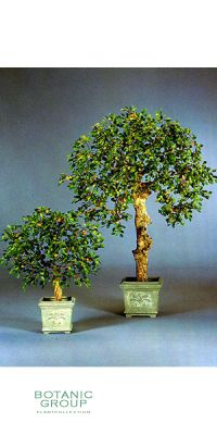 Kunstpflanze - Mandarinenbaum