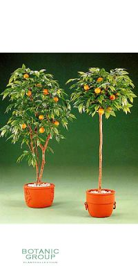 Kunstpflanze - Orangenbaum