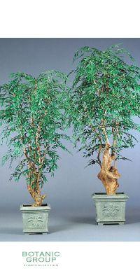 Plastic Plant - Ficus