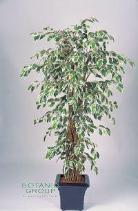 Kunstpflanze - Ficus Liana variegata