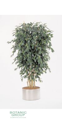 Kunstpflanze - Ficus exotica delux