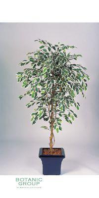 Kunstpflanze - Ficus benjamini stam