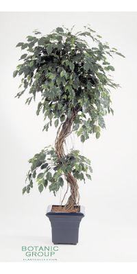 Kunstpflanze - Ficus Korkenzieherform