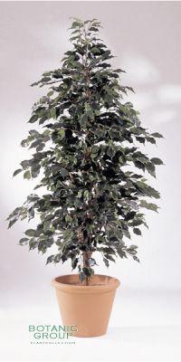 Kunstpflanze - Ficus exotica natur