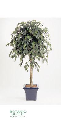 Kunstpflanze - Ficus deluxe UMBRELLA
