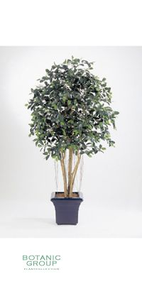 Kunstpflanze - Ficus retusa