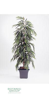 Kunstpflanze - Ficus longfolia