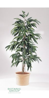 Kunstpflanze - Ficus longfolia new