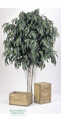 Kunstpflanze - Ficus longfolia GIANT