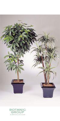 Kunstpflanze - Dracaena deremensis