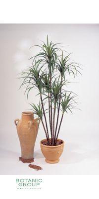 Kunstpflanze - Dracaena marginata