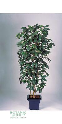 Kunstpflanze - Kaffeebaum blühend