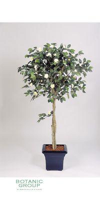 Kunstpflanze - Camelia japonica