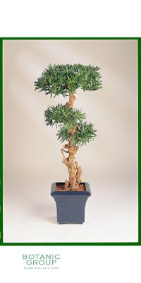 Artificial plant - Podocarpus bonsai I