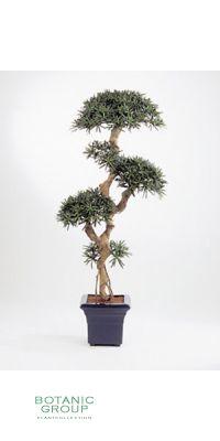 Kunstpflanze - Podocarpus bonsai II