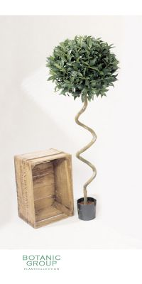 Kunstpflanze - Laurus nobillis spiral