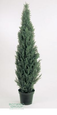 Kunstpflanze - Zeder glauca
