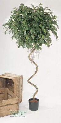 Kunstpflanze - Ficus Kugel Spiralstamm