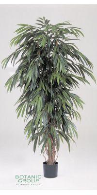 Kunstpflanze - Ficus longfolia liana