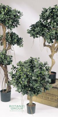 Kunstpflanze - Ficus panda Kugel