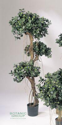 Kunstpflanze - Ficus panda Stammwuchs