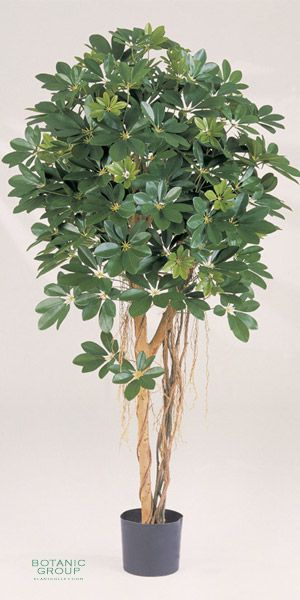 Artificial plant schefflera variegata - Schefflera variegata ...