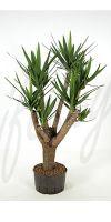 Yucca elephantipes - Palmlilie, verzweigt