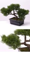 Artificial Plant Bonsai Zeder