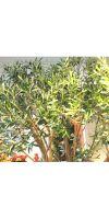 Kunstbaum - Olivenbaum Parasol