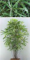 Artificial plant - aralia multitrunk