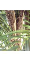 Artificial Palms - Cycaspalm multitrunk